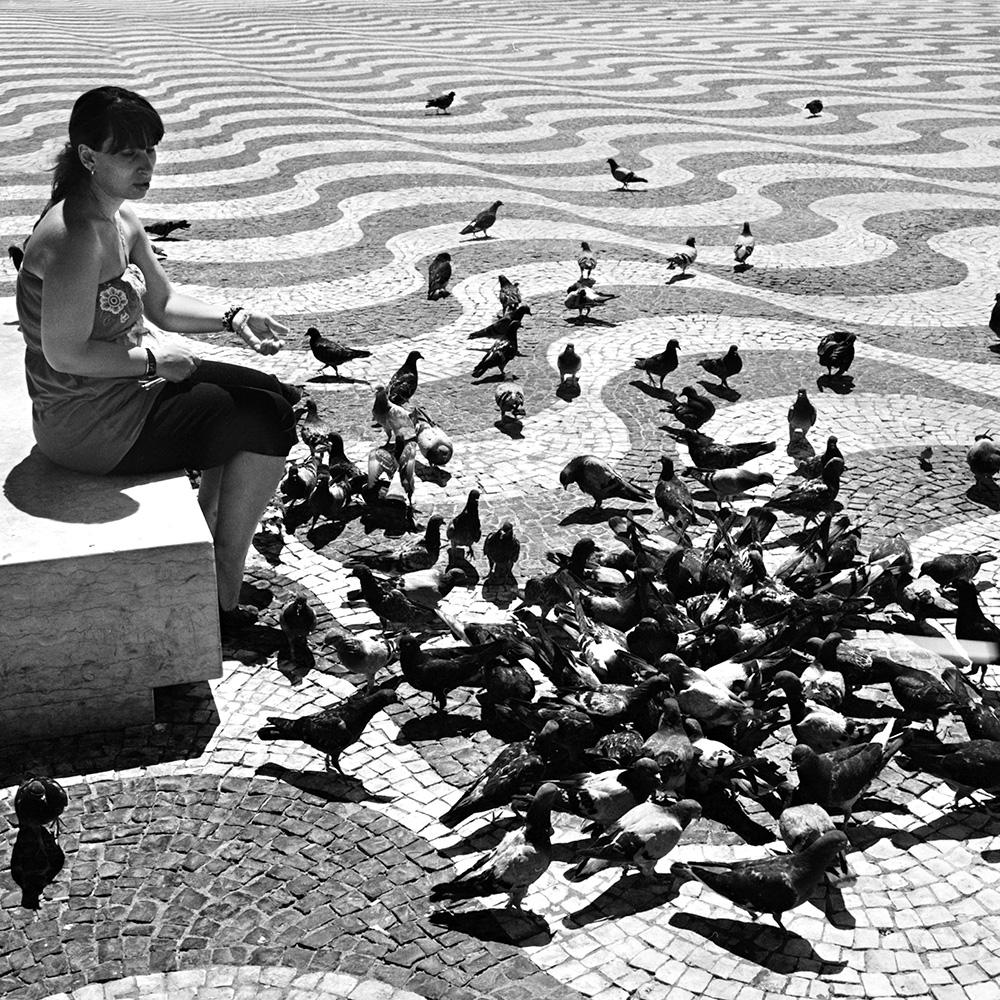 street-pigeons